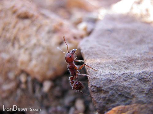 [عکس: ant-1big.jpg]