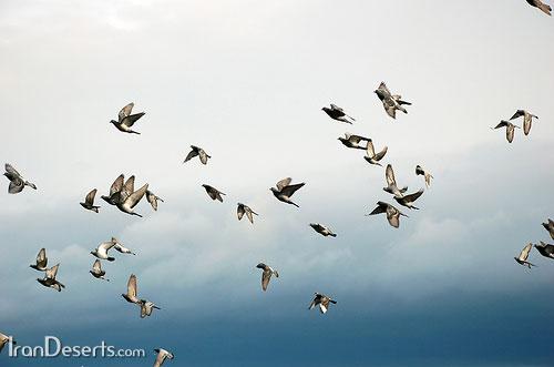 پرواز در آسمان رهايي جانبازان و دانلود XPlane v Win MacOSX Linux بازی