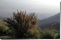 منطقهٔ حفاظت شدهٔ گنو، بندرعباس