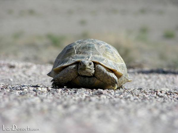 هر بار که میروی، رسیدهای!سنگپشت - لاک پشت - این عدل نیست - به نیت نا امیدی...