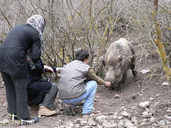 پارک ملی گلستان -عکس از فرهاد رضوی