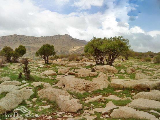 تسوج (دره المون)، بویراحمد