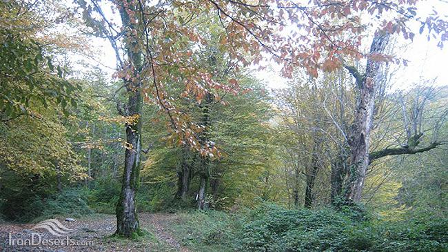 جنگل سرکلاته (بزبنه)، کردکوی