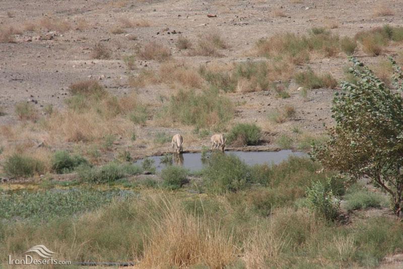 جبیر، پارک ملی کویر، منطقه سفید آب