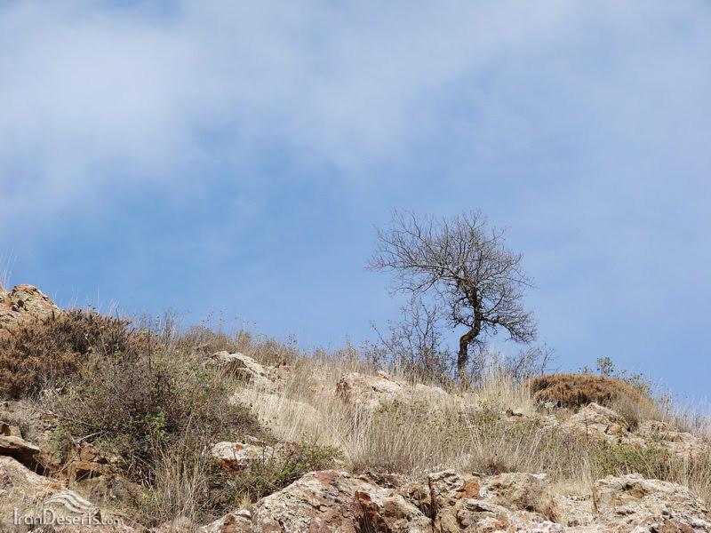پارک ملی کنتال