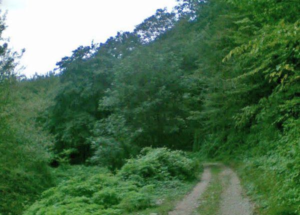 پارک جنگلی تلار، قائم شهر