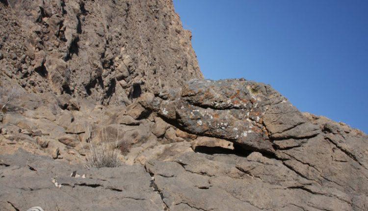 سنگ دایناسور، بردسکن