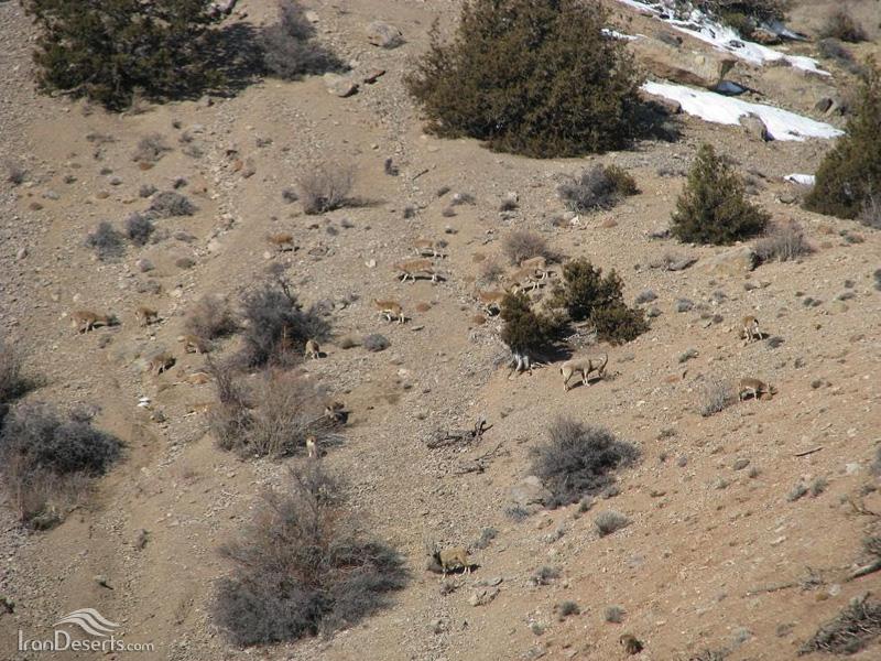 کل و بز، منطقه حفاظت شده پرور