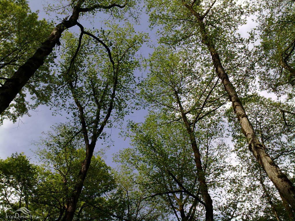جنگلهای زرین گل، علی آباد کتول