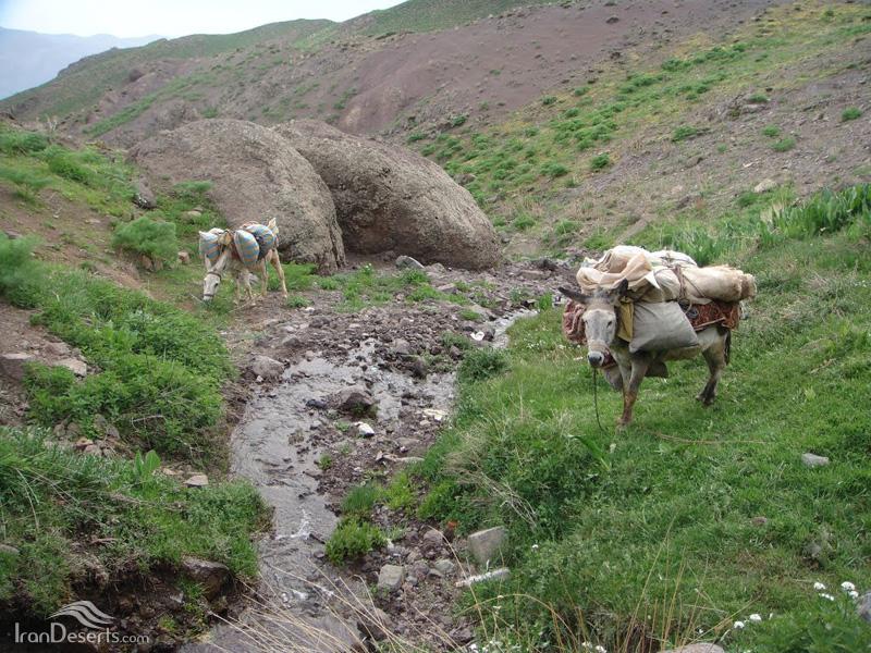 چشمه دانه خانی در مسیر آبشار