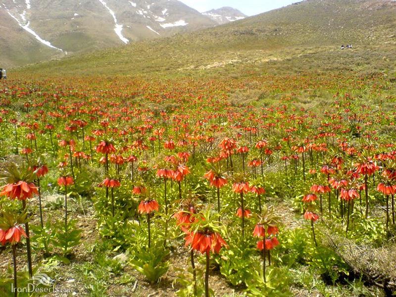 منطقه حفاظت شده گلستان کوه، خوانسار