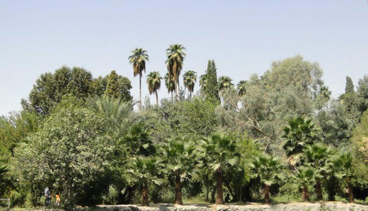 چشمه بلقیس، چرام